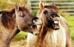 laughing-horses_1507421i